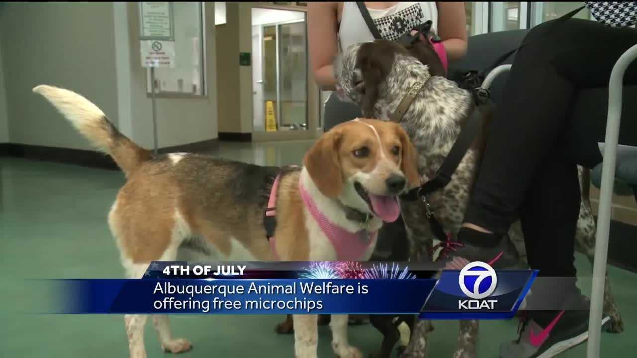 Every 4th of July Animal Welfare says the end up with dozens of stray dogs and cats in their shelters. Many who ran off after holiday fireworks.