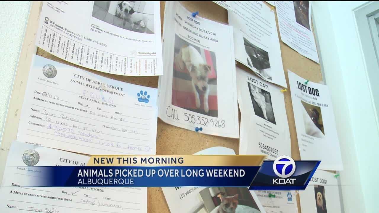 Animals Missing After 4th Of July