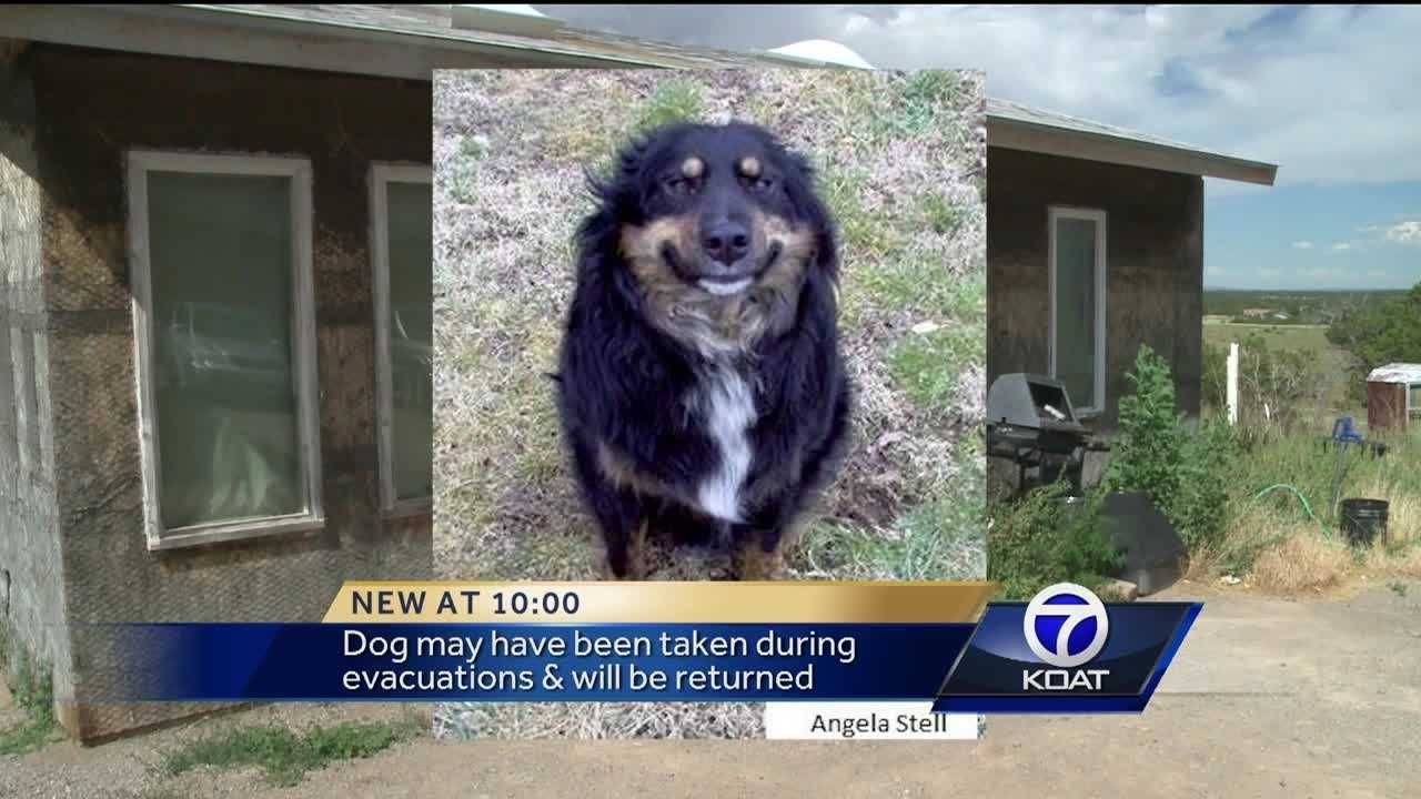 A man fears someone stole his dog, Smiley, after the Dog Head Fire.