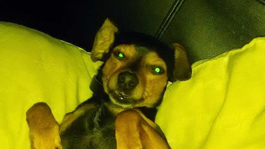 KOAT stolen dog.JPG