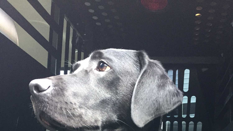 U.S. Marshal's Canine 'Ave'