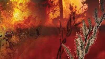 Generic Wild Fire - 13824672