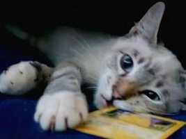CAT GOES MISSING DURING ASPCA RIDE-PKG