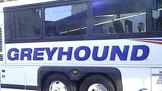 Greyhound Bus - 1001928