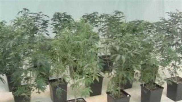 img-Could medical marijuana be legalized in Oklahoma