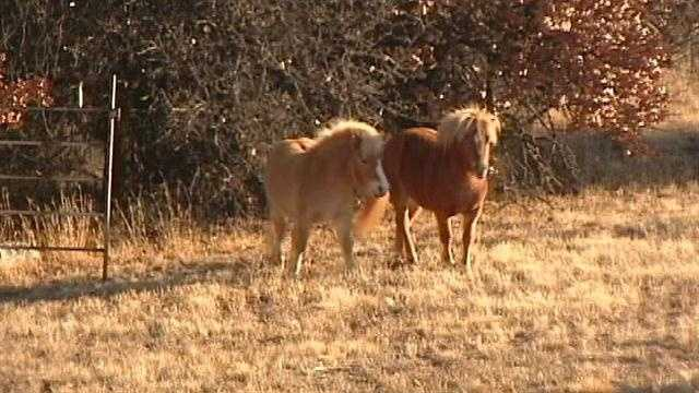 Raw Video: Horses cause delays for I-40 travelers