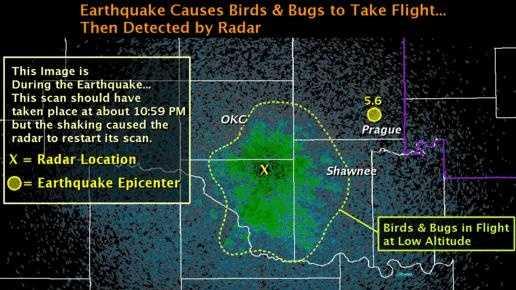 birds-on-radar.jpg