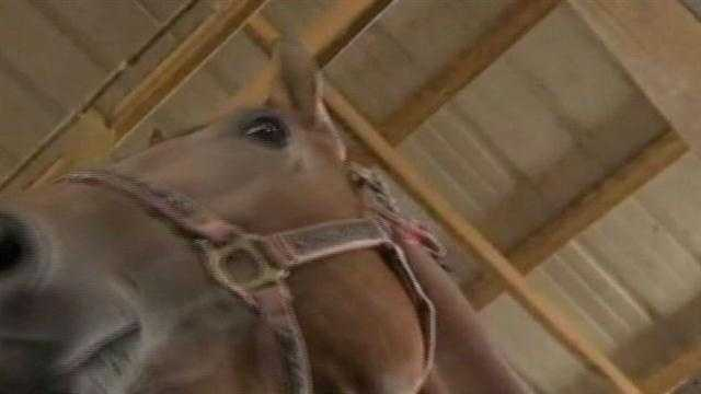 Horse Slaughter facility one step closer to OK