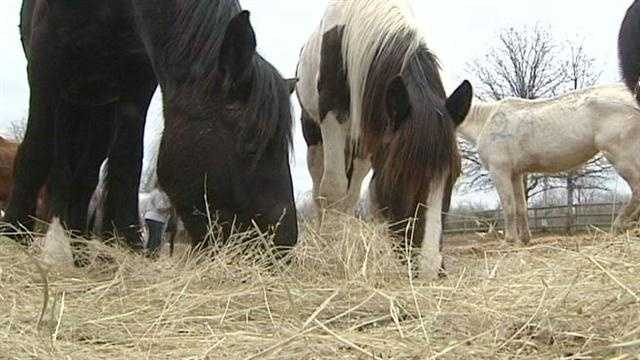 Owner of starving horses has history of animal issues