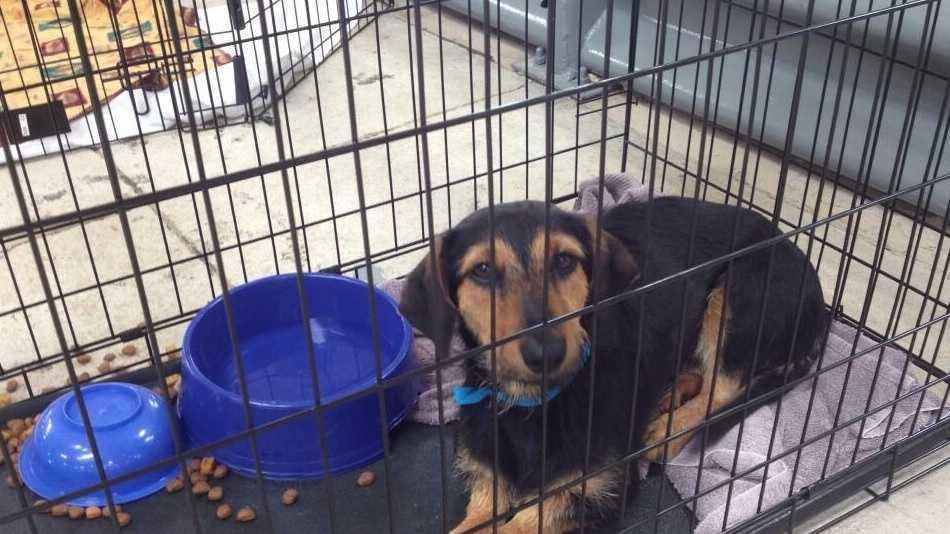 Naveen_dog_shelter.jpg