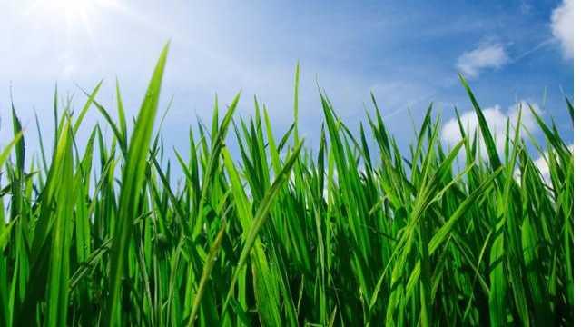 grass-jpg.jpg