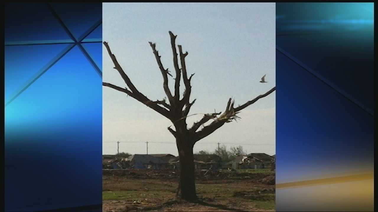 Moore tree serves as sign of strength, recovery