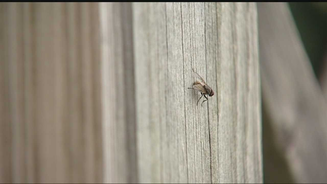 Bugs are bugging nearly every human and animal this summer in Oklahoma.