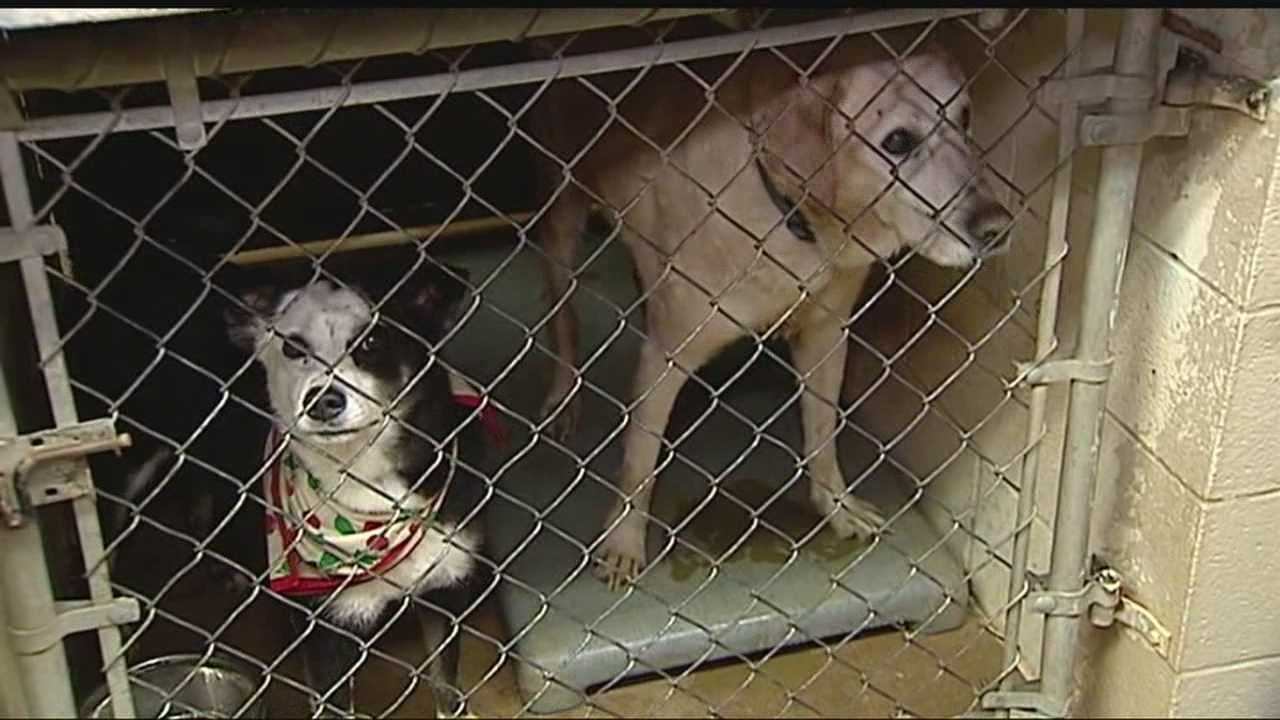 img-New animal shelter brings concerns over dogs cats 6P H