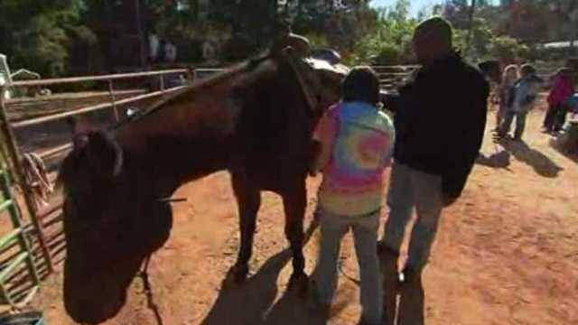 Horses with veterans