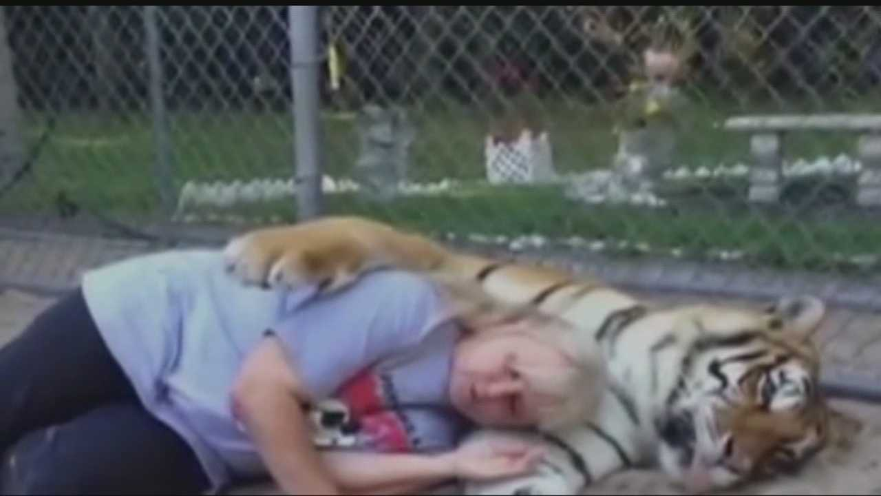 A new video for the G.W. Zoological Park in Wynnewood is taking shots at the USDA in its newest video, which depicts people snuggling with tigers.