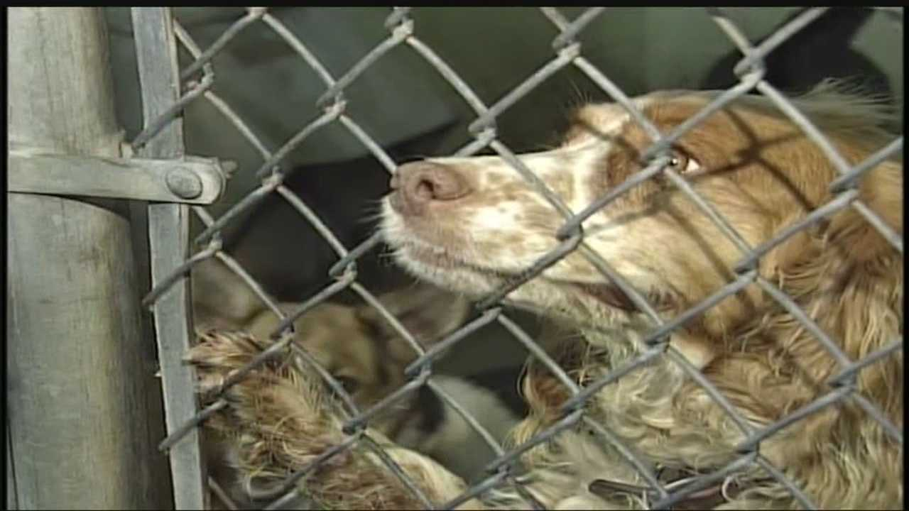 19 counties are in crisis when it comes to controlling the pet population.