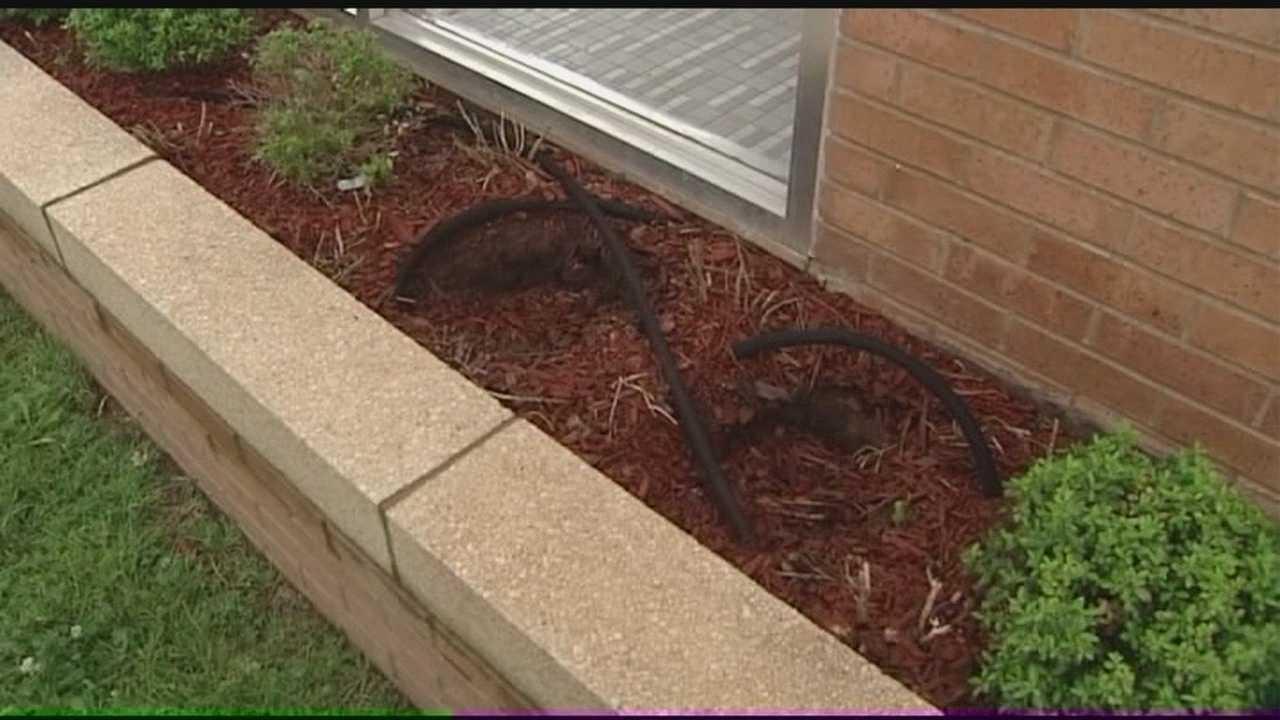 Vandals steal bushes