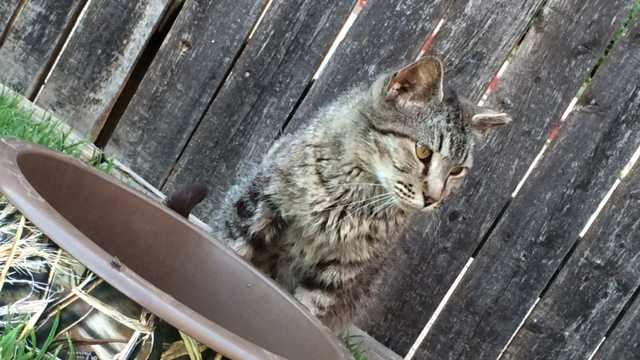 Humane Society says most feral cats around town are part of cat colonies