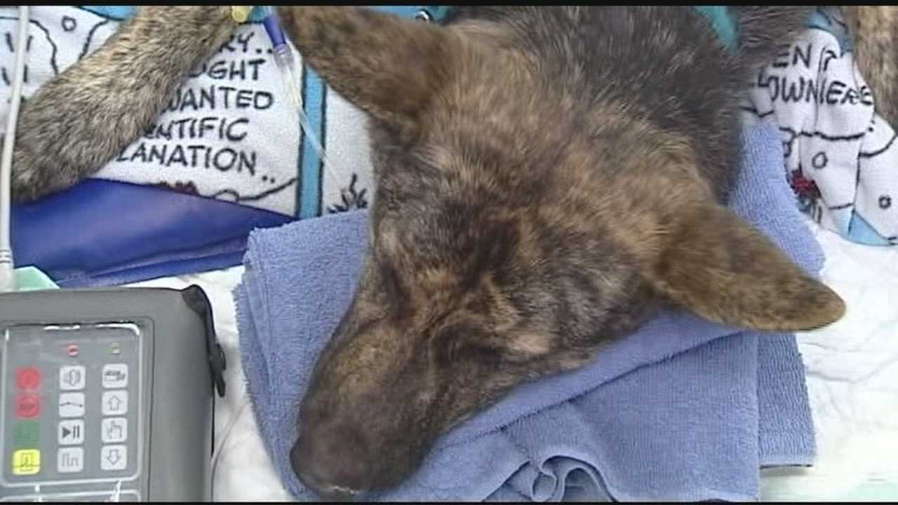 Service dog is poisoned during home break in