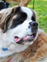 Monterey County SPCA's 2012 Wag n' Walk