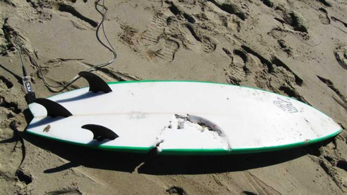 surfboardsharkattack.jpg