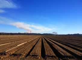 The large column of white smoke on the left is the 1,000-acre controlled burn in Salinas. The black column of smoke on the right is the 10-acre Prunedale wildfire.This photo was shot by Amy Larson in Watsonville when the Prunedale fire first ignited.