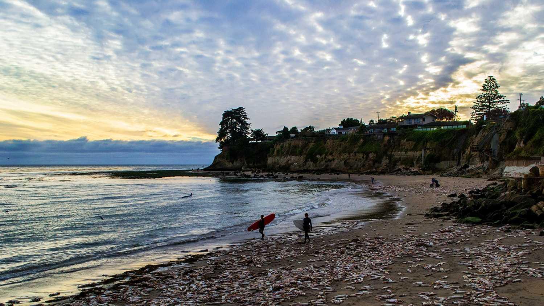 Hundreds of squid line the beach at Pleasure Point in Santa Cruz on Tuesday. (Photo byChris Elmenhurst / Surf The Spot Photography)