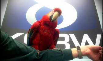 KSBW Pet Of The Week: Jan. 4, 2013This Scarlet Macaw is available for adoption through the Monterey County SPCA.