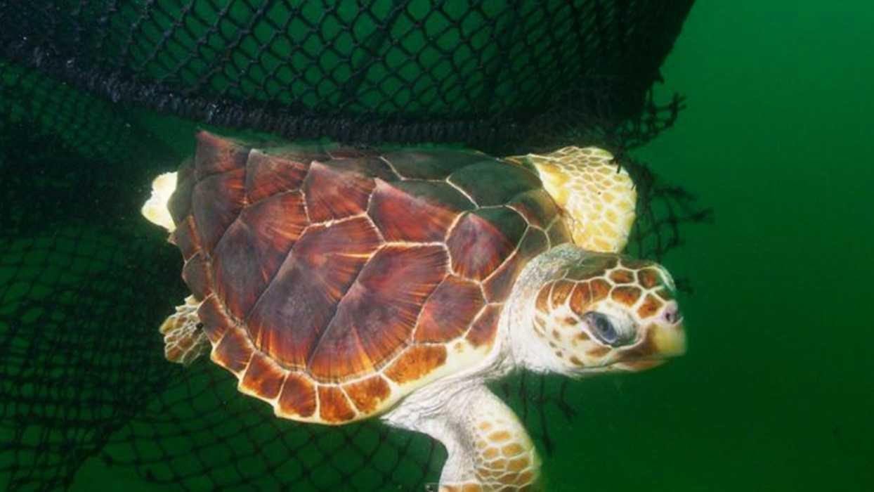 turtle jan8.jpg