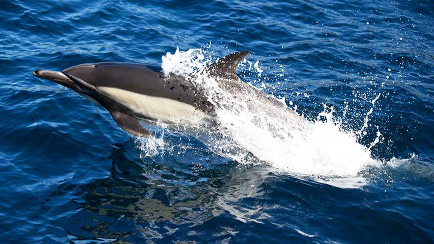dolphinsafari