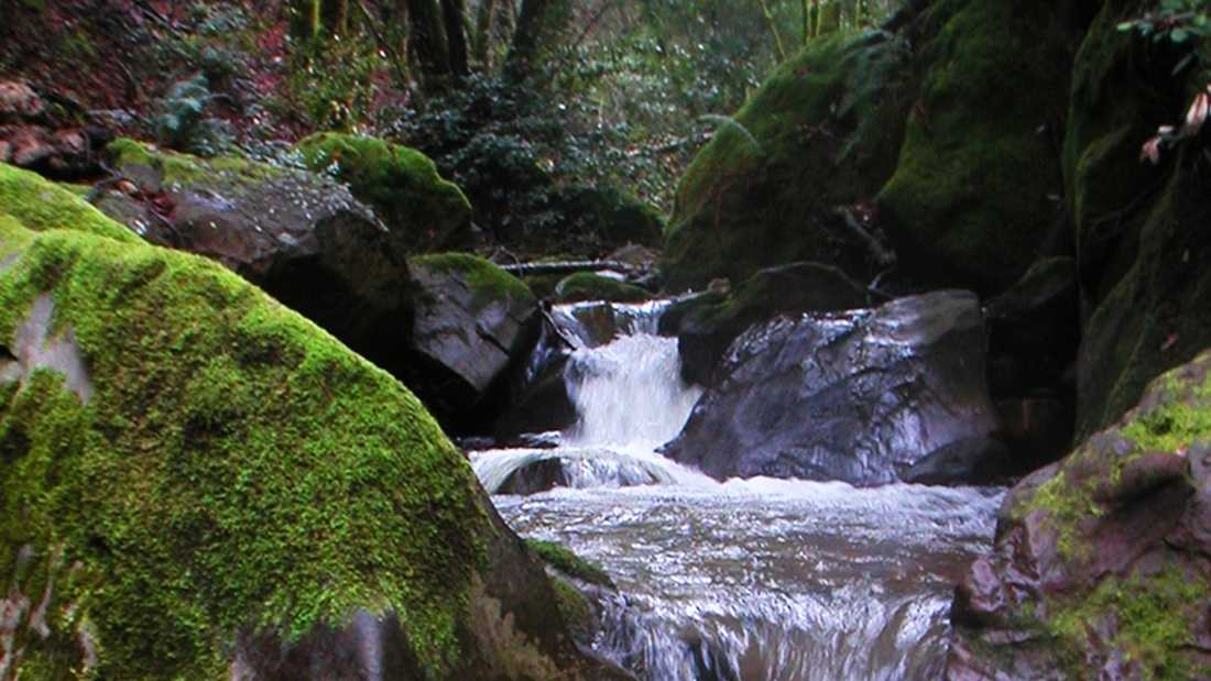 san lorenzo river feb 6.jpg