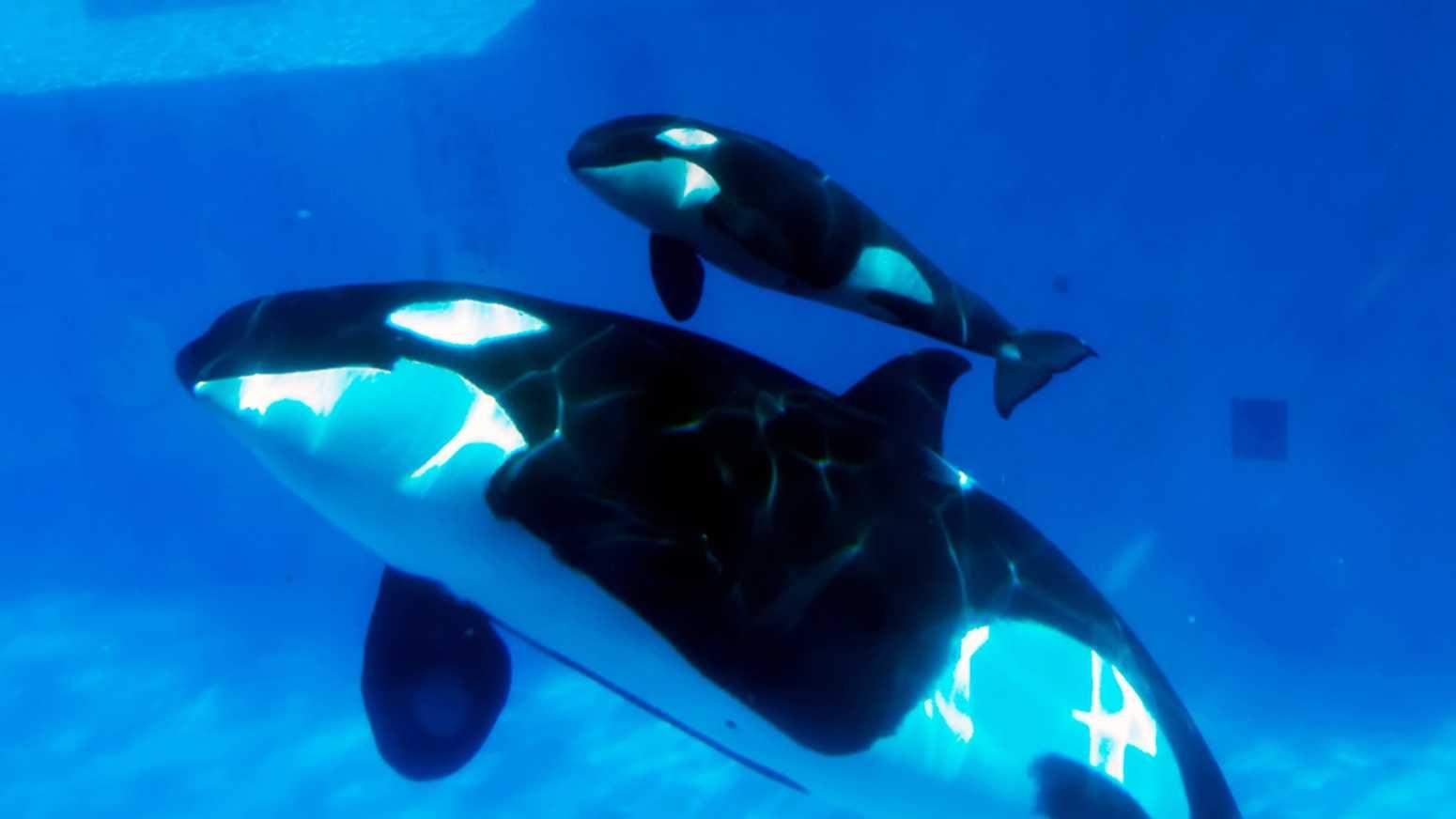 baby whale omg2.jpg