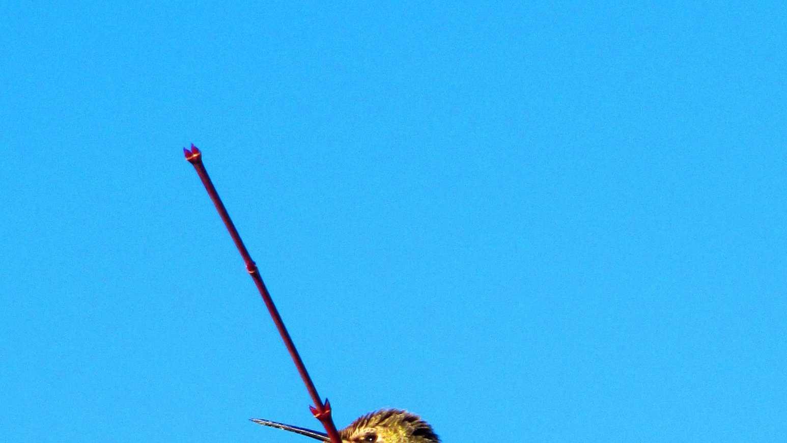 humming bird feb22.jpg