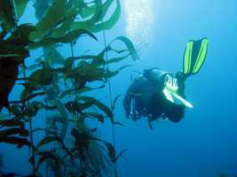 The husband and wife loved outdoor adventures and often went diving off the coast of Carmel and Point Lobos.