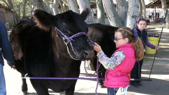 Monterey Classic Junior Livestock Show