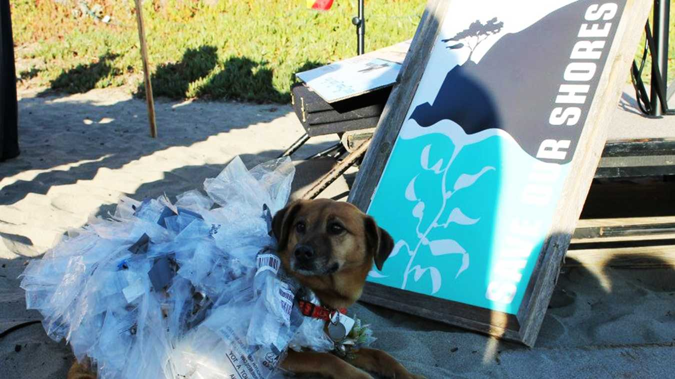 A beach cleanup organized by Save Our Shores on Seascape Beach in Aptos included a dog wearing a plastic bag dress.