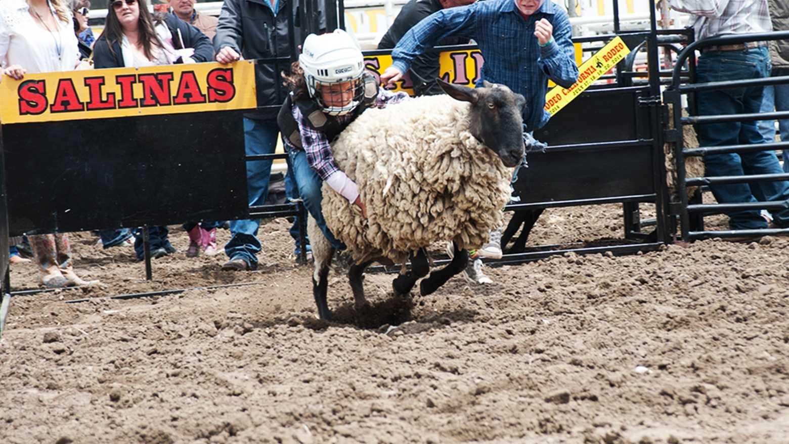 Mutton busting!