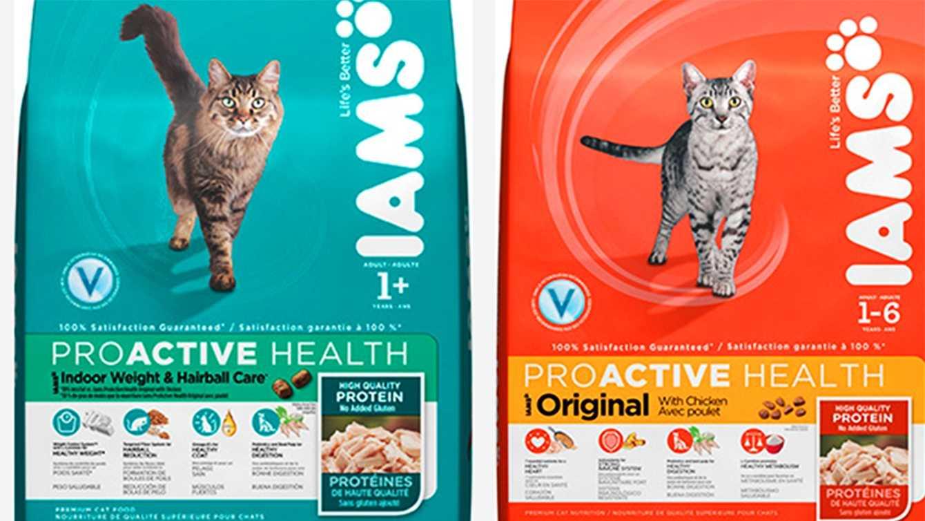 kitties.jpg