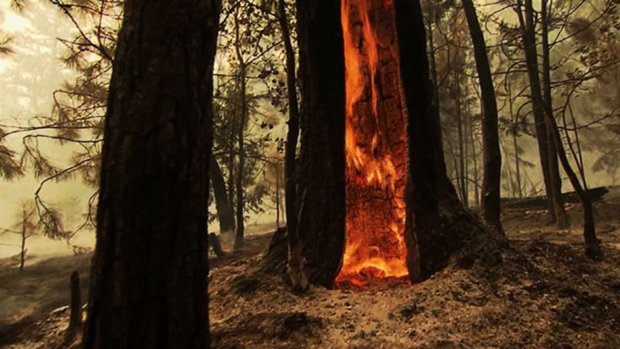 The Rim Fire burning in Yosemite has become the largest fire in the Sierra's recorded history.