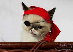 One day, Schaffer said her roommate dressed up the kitten in a hat and an eye patch to make him look like a pirate. A photo posted online of the buccaneer kitten exploded with popularity.The roommates have since made prints and posted them for sale. The proceeds go toward the animal shelter to pay to treat all animals. Schaffer said the response has been overwhelming.