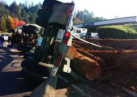 Huge redwood tree trunks spilled onto the roadway.