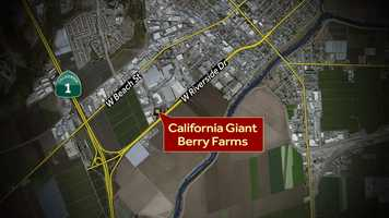 Anchor Brittany Nielsen will be at the Cal Giant Berry cooler facility on Industrial Road in Watsonville.