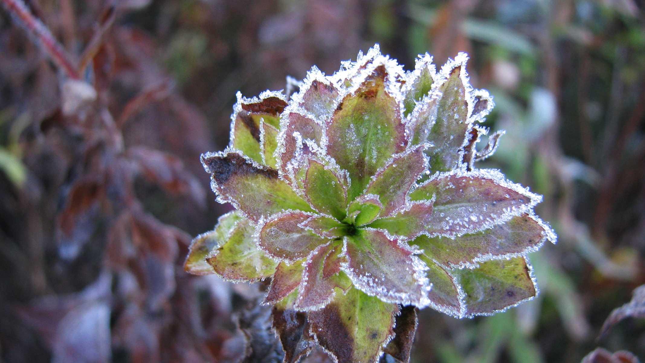 frost weather.jpg