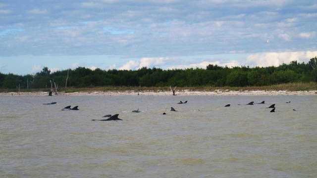whales Everglades National Park