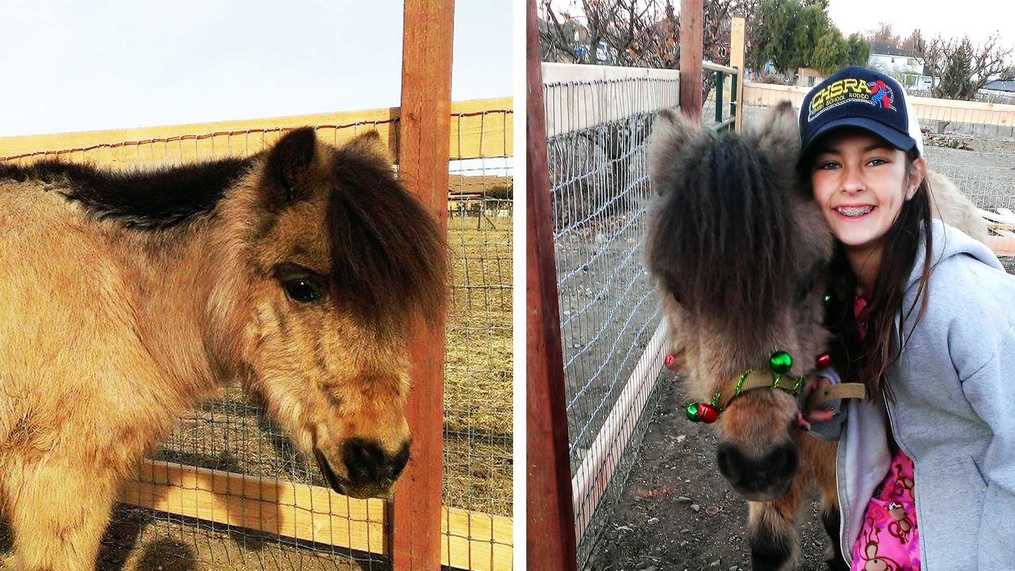 pony westrick hollister.jpg