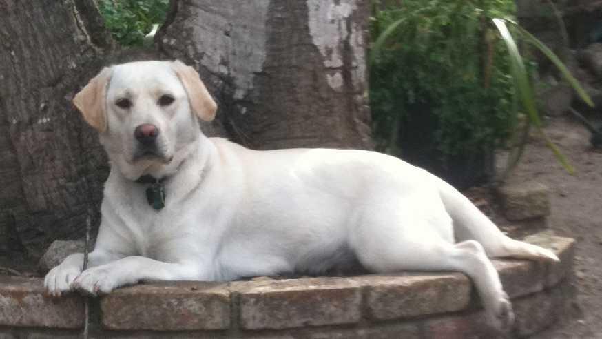 Monterey dognaping case