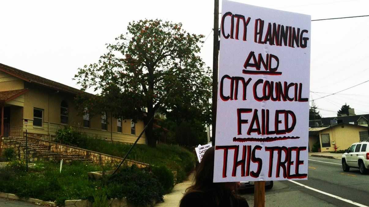 Santa Cruz tree protest