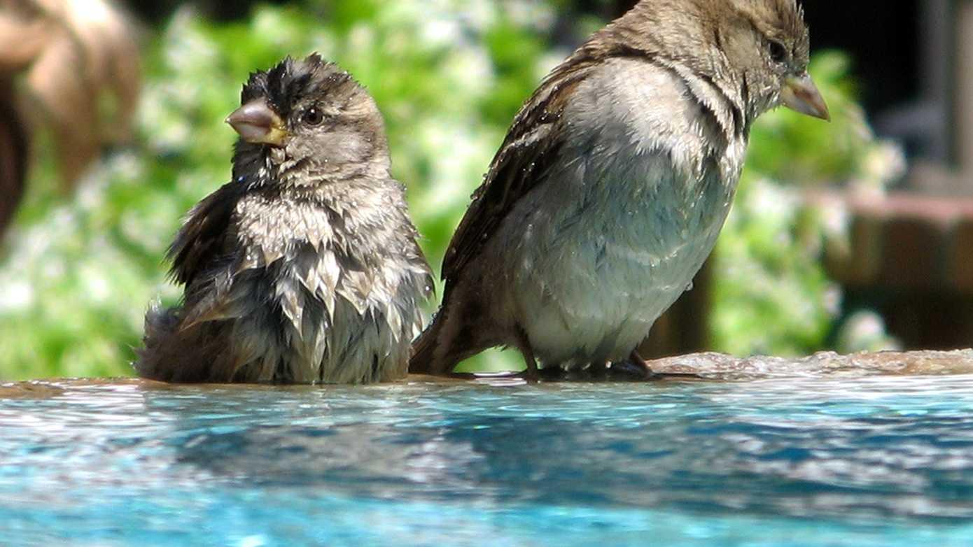 bird bath.jpg