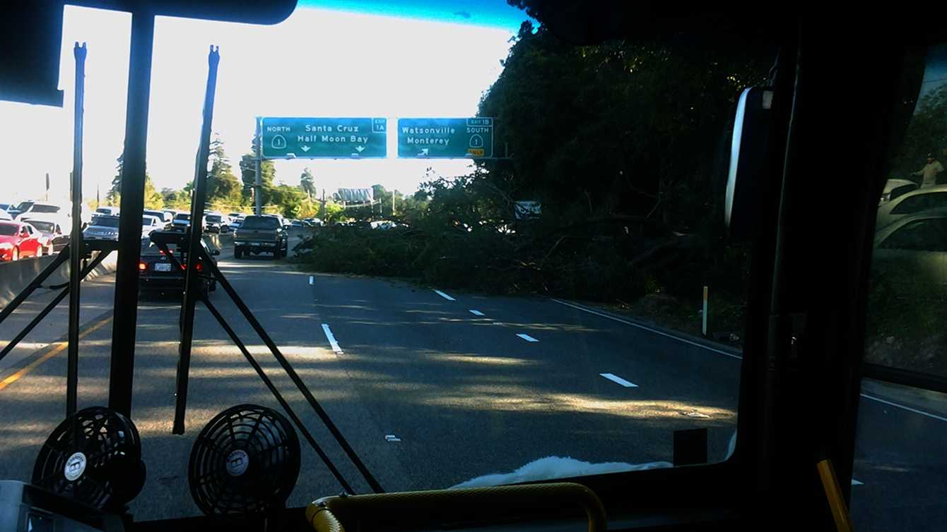 A tree toppled over and landed on Highway 17 just north of Santa Cruz. (June 16, 2014)